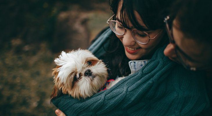 Pet Tips Dog Owners Should Definitely Know About